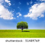 Field Of Grass And Lone Tree