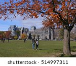 Stock photo oak tree in brilliant fall colors on college campus 514997311