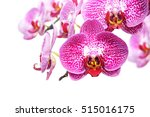 Blossoming Orchid Flower ...