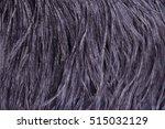 Ostrich Feathers  Black Textur...