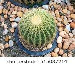 Big Cactus Thorny Plant...