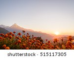 American Marigold Flower With...