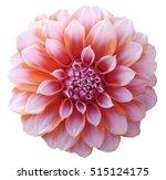 dahlia red orange   flower ... | Shutterstock . vector #515124175