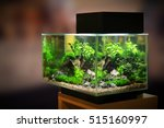 Stock photo pet shop aquarium 515160997