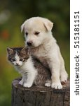 Stock photo cute puppy and kitten on the grass outdoor 515181151