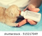 Feeding little red kitten with milk replacer from bottle