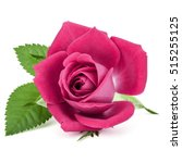Pink Rose Flower Head Isolated...