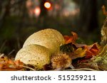 Two Pigskin Poison Puffballs O...