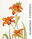 Flowers Lilies Orange ....