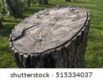 of tree trunk cut | Shutterstock . vector #515334037
