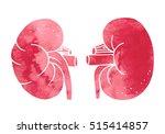 Human Kidneys Anatomy...