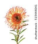 beautiful exotic flower... | Shutterstock . vector #515444041