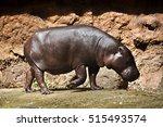 Pygmy Hippos Are Smaller...