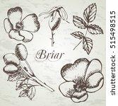 dog rose. brier. eglantine.... | Shutterstock .eps vector #515498515