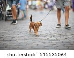 Stock photo the dog with the owner goes on urban roadway 515535064
