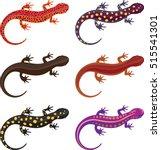 Salamander Clip Art Set  ...
