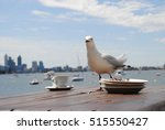 Thieving Seagull On A Table In...
