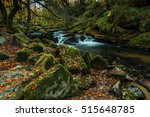 wild river or brook in forest... | Shutterstock . vector #515648785