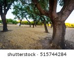 Cork Trees Natural Resources...