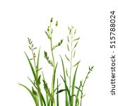 watercolor drawing green grass  ... | Shutterstock . vector #515788024