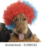 Airedale Terrier Wearing...