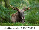 Wildlife Scene From Sweden....