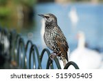 Starling Bird.
