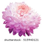 Stock photo pink chrysanthemum flower pink center white background isolated with clipping path closeup 515940121
