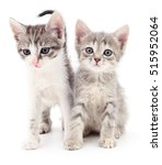 Stock photo two small kittens isolated on white background 515952064