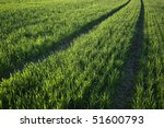 corn and road | Shutterstock . vector #51600793