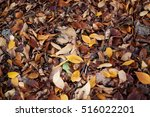 Autumn Background  Brown Leave...