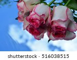 flowers  reflection in pure... | Shutterstock . vector #516038515
