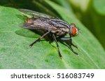 true fly | Shutterstock . vector #516083749