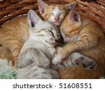 Stock photo cats sleeping in the basket 51608551