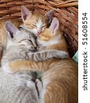 Stock photo cats sleeping in the basket 51608554