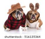 Dogs Dressed Up Like A Hunter...