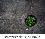 concrete floor   sapling   Shutterstock . vector #516140635