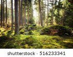 In all its freshness - Forests after winter - stock photo