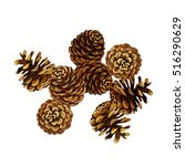 pine cone vector illustration.... | Shutterstock .eps vector #516290629
