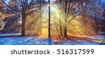 beatifull morning sunrays in... | Shutterstock . vector #516317599