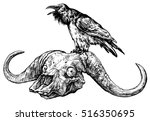 Raven On A Skull Of Buffalo ...