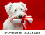 Dog With Gifts On Red Background