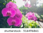 Beautiful Purple Orchids...
