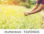 child's hand touch purple... | Shutterstock . vector #516534631