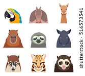 set of south america animals... | Shutterstock .eps vector #516573541