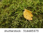 fallen leaf on moss | Shutterstock . vector #516685375