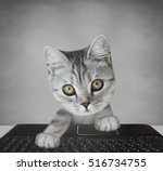 cat with laptop | Shutterstock . vector #516734755
