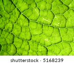 a close up photographic image... | Shutterstock . vector #5168239