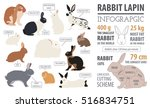 rabbit  lapin breed infographic ... | Shutterstock .eps vector #516834751