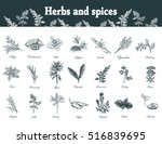 herbs and spices set. hand... | Shutterstock . vector #516839695